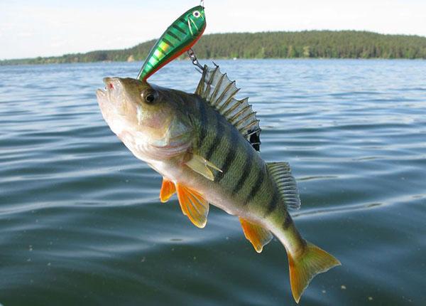 когда клюет рыба в июне